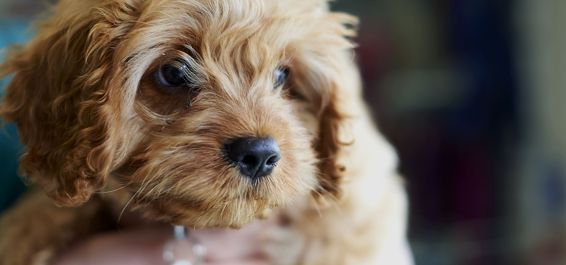 Having a dog reduces your risk of an early death