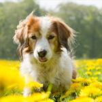 Get your older pet screened for diseases