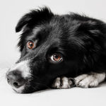 Keep dogs in Norwich safe from Alabama Rot