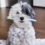 Dental advice for dogs from All Creatures