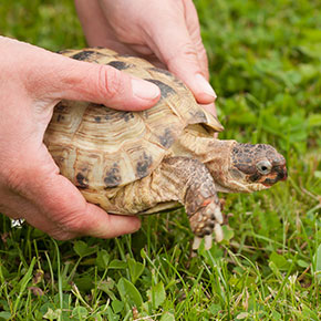 Caring for your turtle in Norfolk