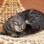 It's the time of year when cat fleas strike in Norfolk
