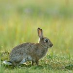 Cool rabbit advice from All Creatures