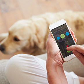 Top tech for pets from All Creatures Healthcare