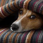 Pet pain awareness in Norfolk