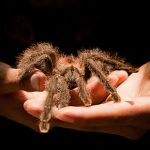 Five creepy but lovable pets from All Creatures Healthcare