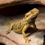 Cold weather care for reptiles in Norfolk