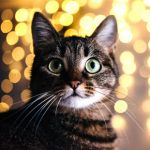 Christmas treats for cats: All Creatures' top three