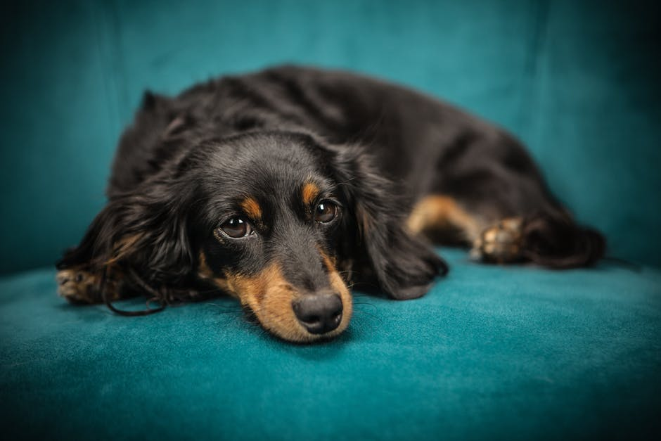 Be aware of rise in cases of gastroenteritis in dogs in Norwich