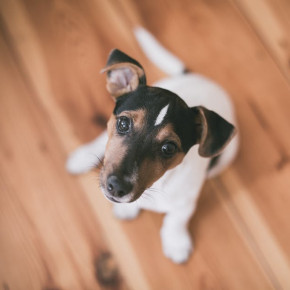 Check out our pointers on worming your dog