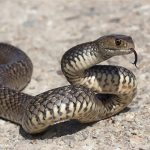 Snake owner in Norwich? Learn more about shedding