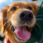 Seatbelt vs crate: travelling with your dog in Norwich