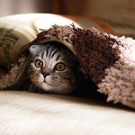 Cat calming tips for a trip to Norwich