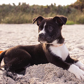 Try our puppy training tips for a healthy, happy dog