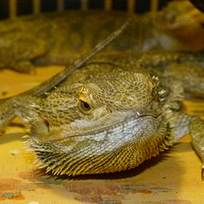 Louise's top three reptile concerns