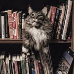 All Creatures' favourite animal books