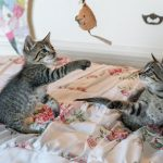 Cracking Christmas gifts for cats in Norwich