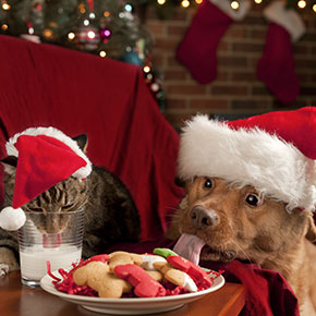 All Creatures' tips for making Christmas safer for pets