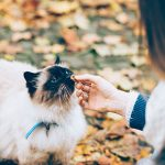 Top tips for cat treats