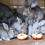 Perfect picks for rabbit treats in Norfolk