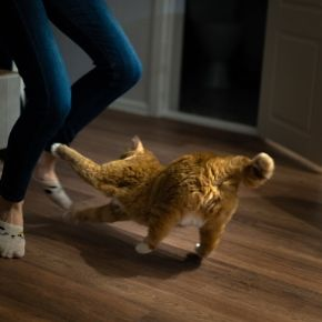 Create a home cat gym with the help of All Creatures Healthcare