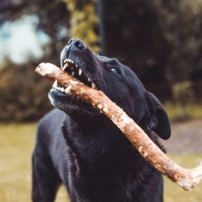 Brush up on dog dental health