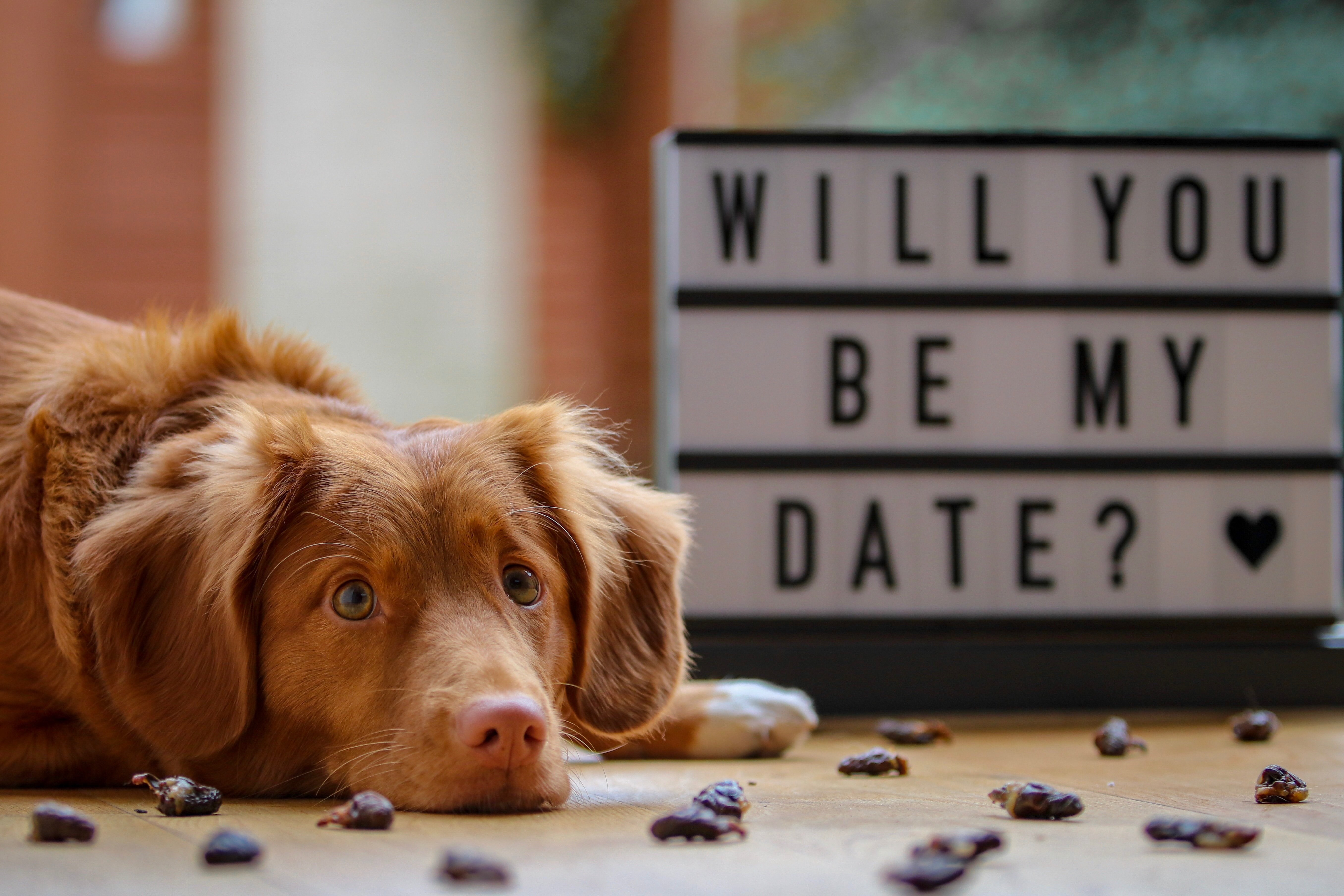 Love your pet this Valentine's Day