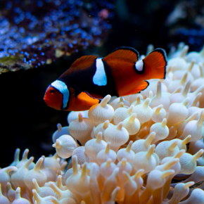 A short guide on caring for tropical fish from All Creatures Healthcare