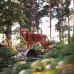 All Creatures' summer safety tips for dogs