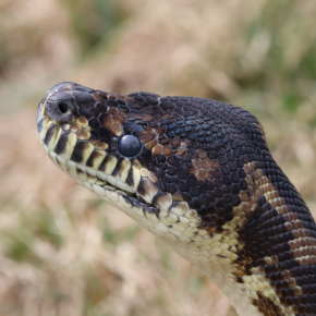 World Snake Day – Snake Facts & Care
