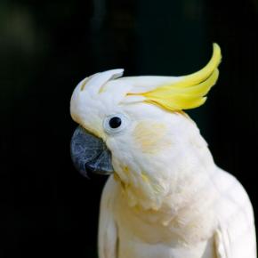 All Creatures Healthcare can help you prepare your exotic bird for colder months.