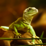 Educate yourself with All Creatures Healthcare for Reptile Awareness Day