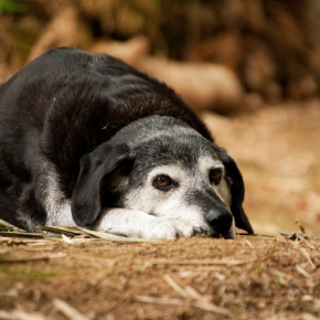 Take All Creatures Healthcare's canine health assessment quiz for older dogs