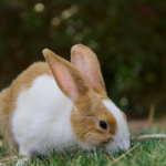 Louise has a test to help you spot the signs rabbit arthritis