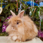 Rabbit care and preparing your home for Christmas