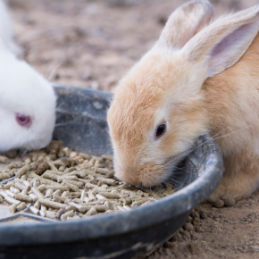 All Creatures Healthcare's rabbit meal planner is perfect for the new year