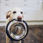 How to feed your dog – everything you need to know