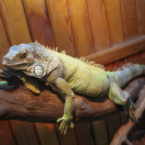 Exotic pet enrichment tips from head vet Louise Rayment-Dyble