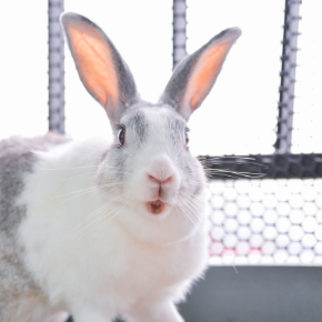 Rabbit owners in Norfolk need this life-saving dental advice