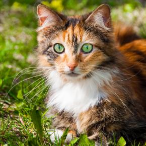 Sarah has some spring advice for spotting cat fleas