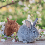 Do you know how to check your rabbit for worms?