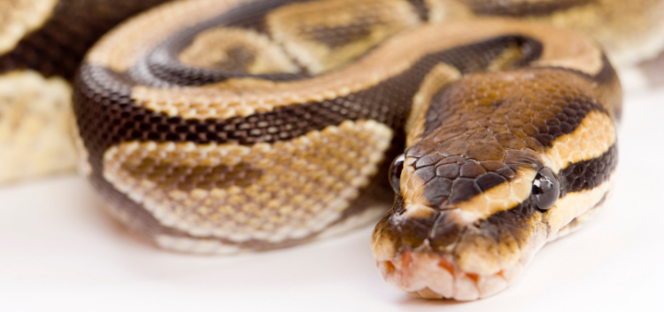Specialist care and advice for all exotics