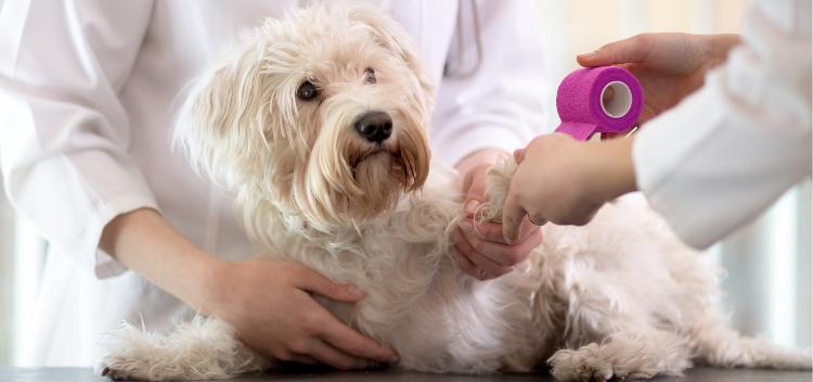 Pet insurance for Norwich
