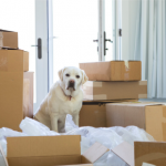 All Creatures' tips for moving house with your dog