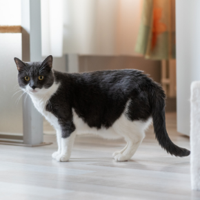 All Creatures' advice on post-covid cat obesity & separation anxiety