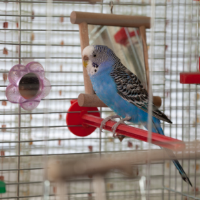Louise offers advice on why birds pluck their feathers
