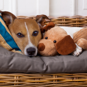 The benefits of neutering your dog