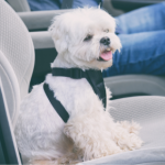 Louise's 10 steps to treating car sickness in dogs