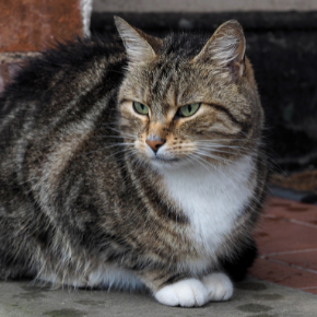 Louise explains why not to leave your cat home alone like Macaulay