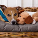 Six tips for reducing separation anxiety in dogs